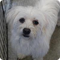 Adopt A Pet :: Dottie - Tacoma, WA