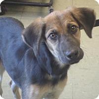 Adopt A Pet :: FAITH - Cleveland, MS