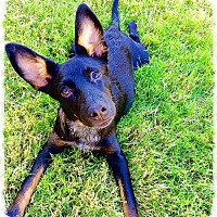 Adopt A Pet :: ANNIE MAE - Loves Kids! - Chandler, AZ