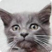 Adopt A Pet :: Felicity $20 - Lincolnton, NC