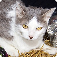 Adopt A Pet :: Smoke - Livonia, MI
