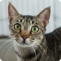 Adopt A Pet :: Tabitha - Los Angeles, CA
