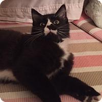 Adopt A Pet :: Lewy - Covington, KY
