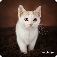 Adopt A Pet :: Betty - Plymouth, MN