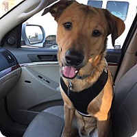 Adopt A Pet :: Jake - Surprise, AZ