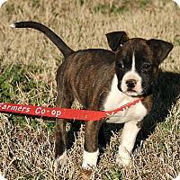 Adopt A Pet :: Maddie - Washington, DC