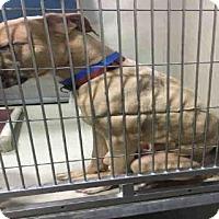 Adopt A Pet :: A1046789 - Bakersfield, CA