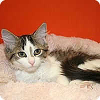 Adopt A Pet :: KELLY - SILVER SPRING, MD