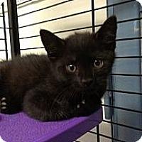 Adopt A Pet :: John Forsythe - Richboro, PA
