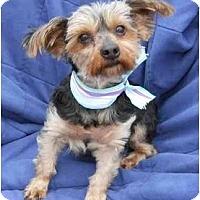 Adopt A Pet :: Sweet CHARITY - Memphis, TN