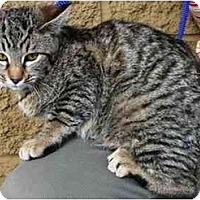 Adopt A Pet :: Candy - Gilbert, AZ