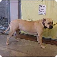 Adopt A Pet :: Briana/ADOPTED! - Zanesville, OH