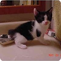 Adopt A Pet :: Mona - Inverness, FL