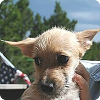 Adopt A Pet :: Teddy - Denver, CO