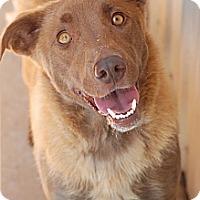 Adopt A Pet :: Honey Bun - Knoxville, TN
