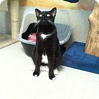 Adopt A Pet :: Boots - Newport Beach, CA