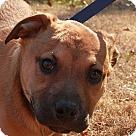 Adopt A Pet :: Hooper