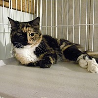 Adopt A Pet :: BOO - Bartlett, IL