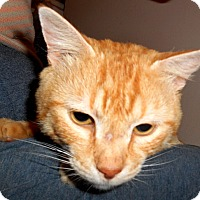 Adopt A Pet :: Patrick - Chattanooga, TN