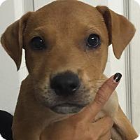 Adopt A Pet :: Angel#5M - Orlando, FL