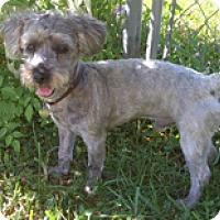 Adopt A Pet :: BARNABY - Melbourne, FL