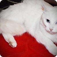 Adopt A Pet :: Elsa - Xenia, OH