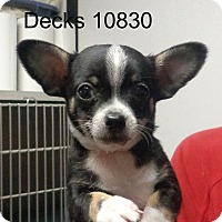 Adopt A Pet :: Decks - baltimore, MD