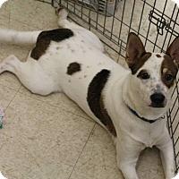 Adopt A Pet :: Casey 644 - Nixa, MO