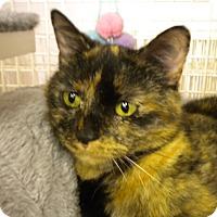 Adopt A Pet :: Aurora - Bridgeton, MO