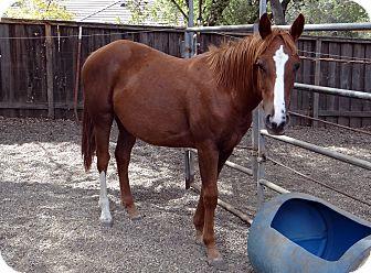 Other/Unknown Mix for adoption in El Dorado Hills, California - Mazie