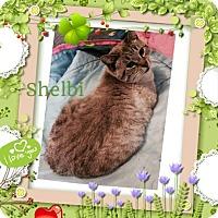 Adopt A Pet :: Selbi - Harrisburg, NC