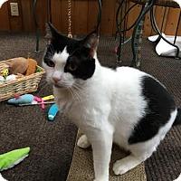 Adopt A Pet :: Daisy - Acushnet, MA