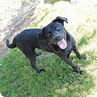 Adopt A Pet :: Remmy - Huntsville, AL