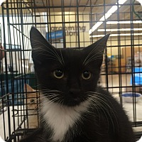 Adopt A Pet :: Thumper & Monkey - Richmond, VA