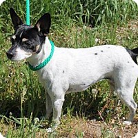 Adopt A Pet :: Beazley - Boise, ID