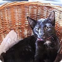 Adopt A Pet :: Sparkle - Tampa, FL