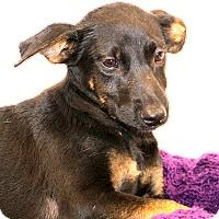 Adopt A Pet :: Wonder Women~ meet me! - Glastonbury, CT