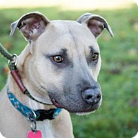 Terrier (Unknown Type, Medium) Mix Dog for adoption in Chestertown, Maryland - Teddy