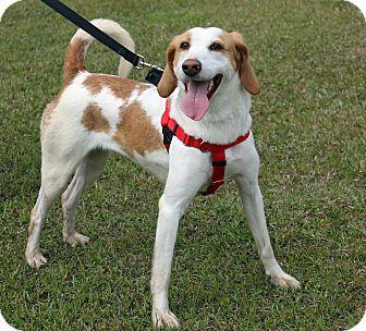 Hound (Unknown Type) Mix Dog for adoption in Newport, North Carolina - Lucy