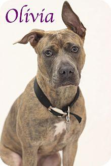 Hound (Unknown Type) Mix Dog for adoption in Bradenton, Florida - Olivia
