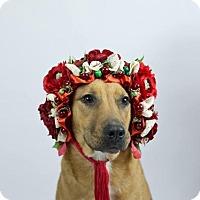 Adopt A Pet :: Hardy - Murphysboro, IL