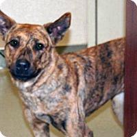 Adopt A Pet :: Oshay - Wildomar, CA