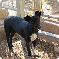 Adopt A Pet :: Tinsel - Granbury, TX