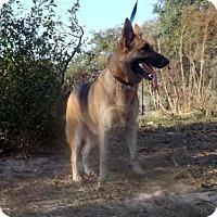 Adopt A Pet :: Enya - Citrus Springs, FL