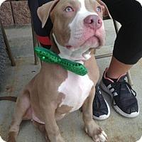 Adopt A Pet :: Toby - Dallas, GA