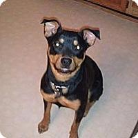 Adopt A Pet :: Sassy - El Paso, TX