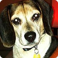 Adopt A Pet :: Cody - bridgeport, CT