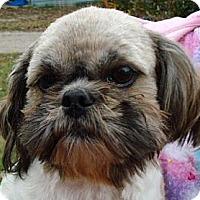 Adopt A Pet :: CORKY - Staunton, VA