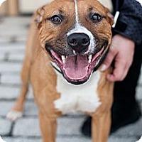Adopt A Pet :: Ember - Reisterstown, MD