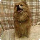 Adopt A Pet :: *COSMO